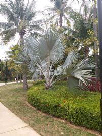 公务员小区斜对面棕榈泉小区